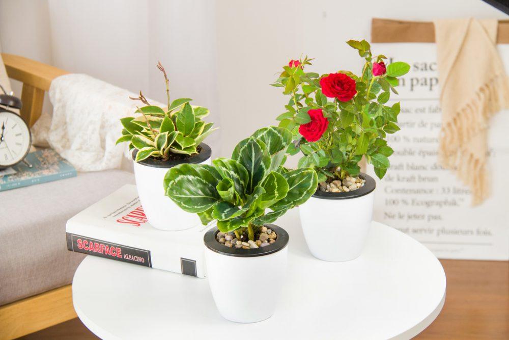 Bloemen en planten cadeau geven
