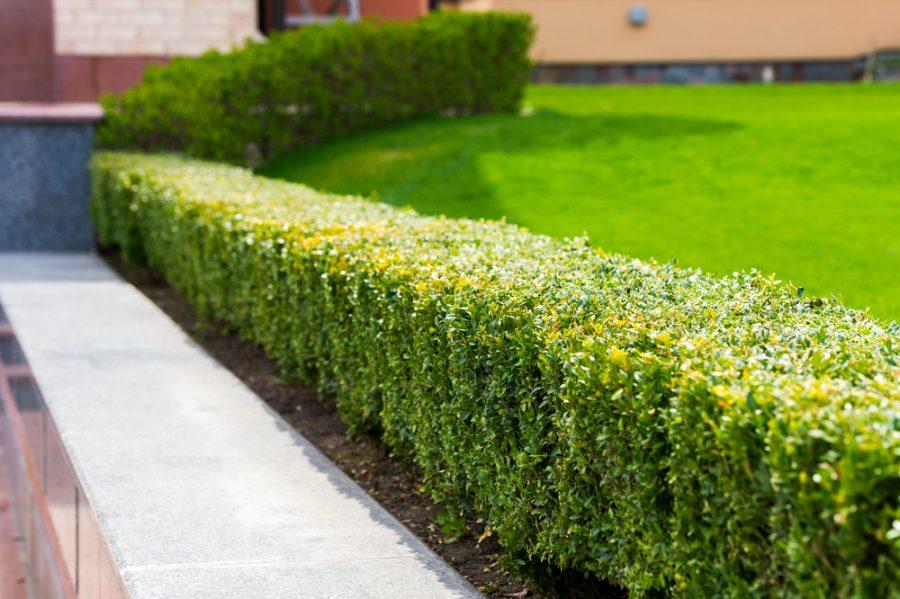 Maak je tuin onderhoudsvriendelijk